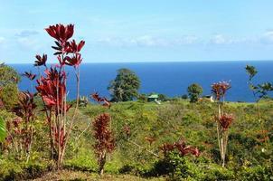 vida havaiana simples