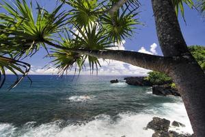 palmeira, litoral norte, estrada para hana, maui, havaí foto