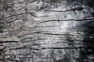 madeira foto