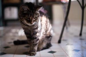 gato de família de manhã foto