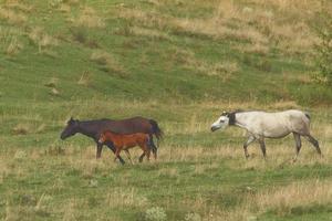família de cavalos perto da fazenda