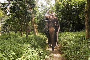 passeio de elefante da família