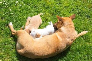 família de cachorro pequeno bonito de raça mista. foto