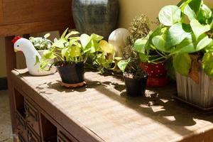 planta na gaveta da mesa de madeira velha foto