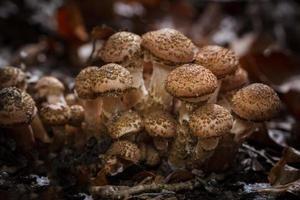 família de cogumelos