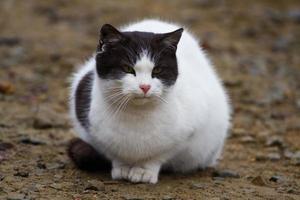 retrato de gato foto