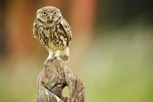 pássaro nervoso foto