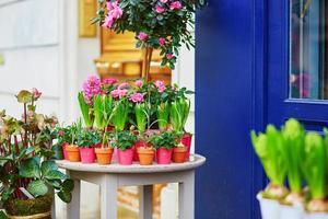 lindas rosas frescas em um mercado de flores foto