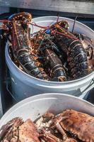 lagosta fresca foto