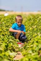 menino no campo de morango