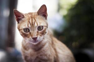 retrato de gato. foto