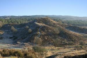 grande colina na floresta foto