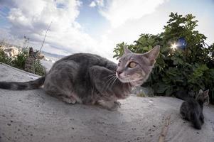retrato de gato.