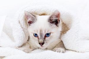 retrato de gatinho foto