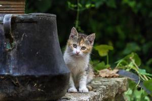 retrato de gatinho
