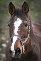 retrato de cavalo foto