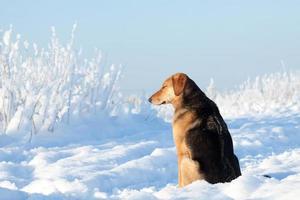 retrato de cachorro foto