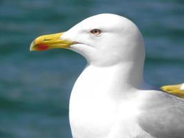 retrato de gaivota foto