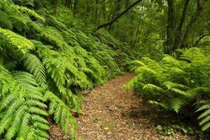 caminho através da floresta tropical de los tilos em la palma
