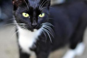 retrato bonito do gato foto