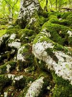 floresta de faias na serra aralar. guipuzcoa. pais vasco. Espanha. foto