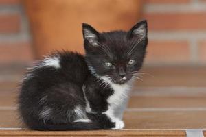 retrato pequeno gato foto