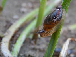close-up de caracol foto