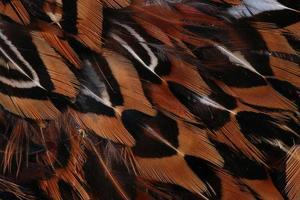 decoração close-up foto