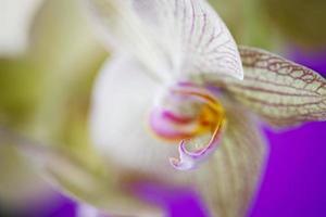 orquídea - (close-up) foto