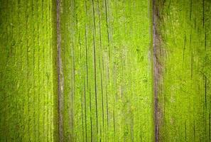 textura de fundo de madeira musgosa foto