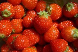 close-up de morangos foto