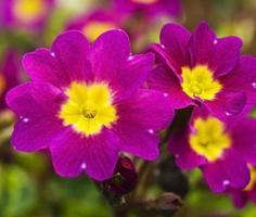 close-up de flores foto