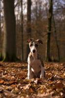 filhote de cachorro na floresta foto