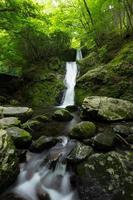 cachoeira e verde fresco foto