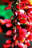 flores vermelhas na Índia
