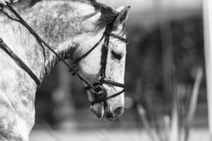 vintage retrato de cavalo foto