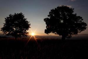 pôr do sol - solitária árvore e sol - imagem de stock