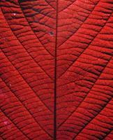 textura de folha, processo com efeito de cor foto
