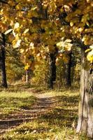 caminho do pé