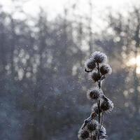 cena de neve com planta foto