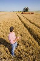 agricultor inspecionando cevada foto