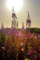 flores roxas foto