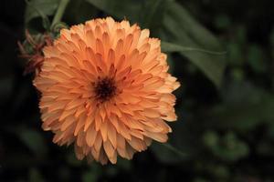 flores bonitas foto