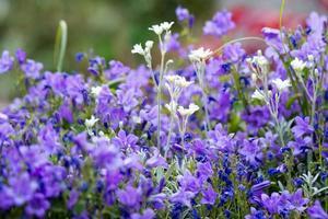 flores no jardim foto