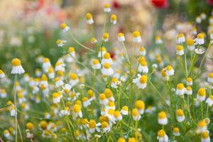 fundos de flores foto