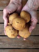 punhado de batatas foto