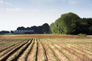 campo plantado foto