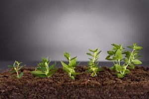 plantas verdes que crescem no solo foto