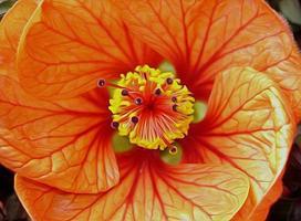 flor closeup foto