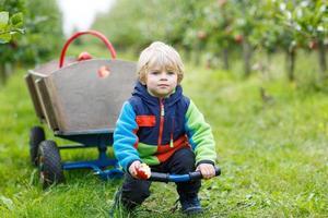 menino da criança na fazenda de apple colheita colheita foto